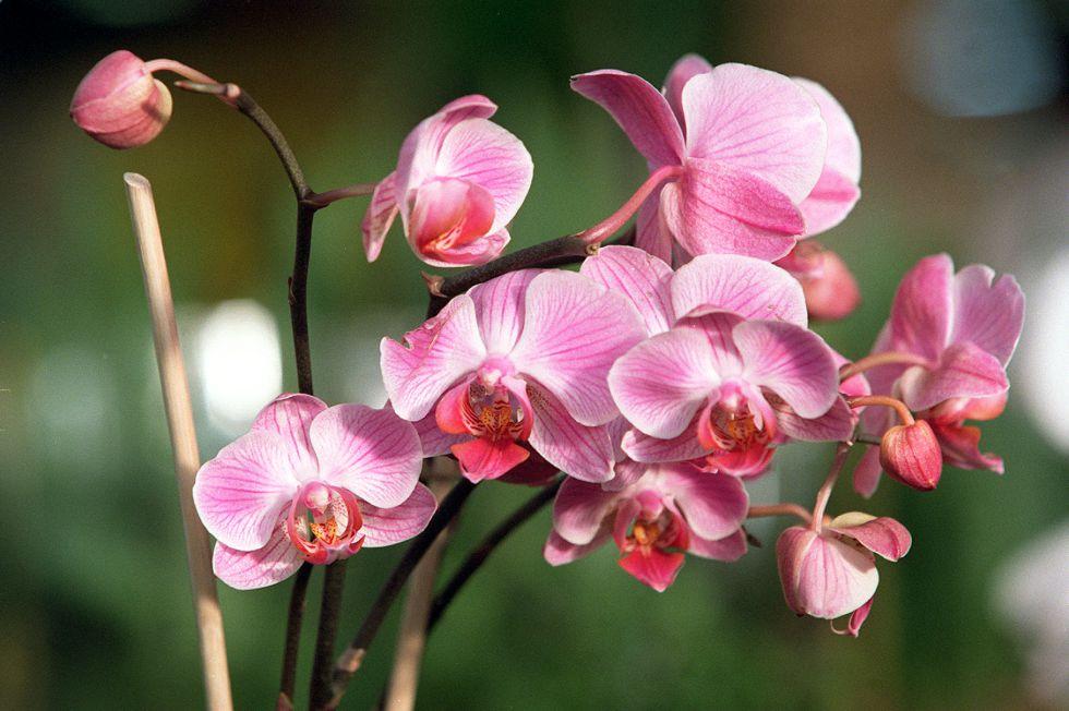 Orquídeas en peligro